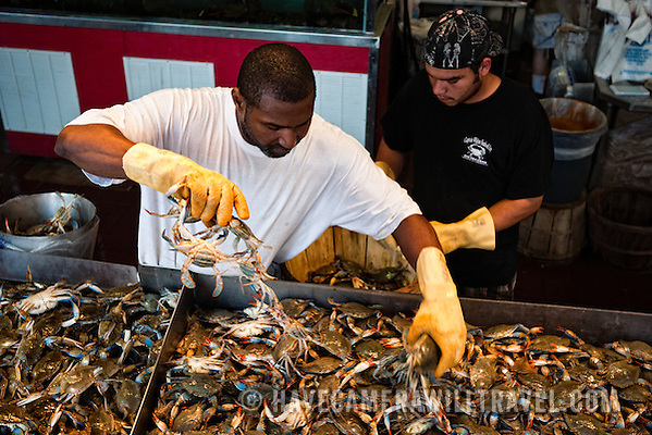 Maine Avenue Fish Market Sorting crabs at the Maine Ave Fish Market j233161537