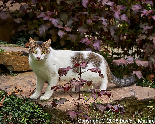 Neighbor's Cat. Image taken with a Fuji X-H1 camera and 80 mm f/2.8 macro OIS lens (DAVID J MATHRE)