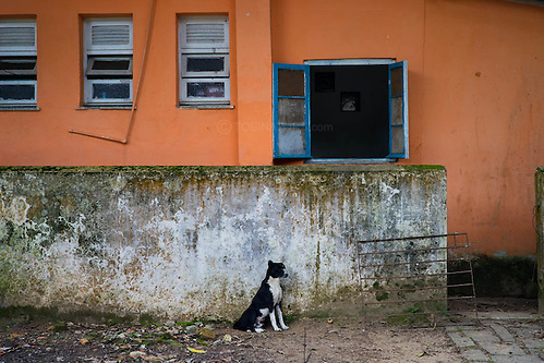 A black and white dog keeps watch in Dois Rios on the island of Ilha Grande, Brazil. Photo by Andrew Tobin/Tobinators Ltd (Andrew Tobin/Tobinators)