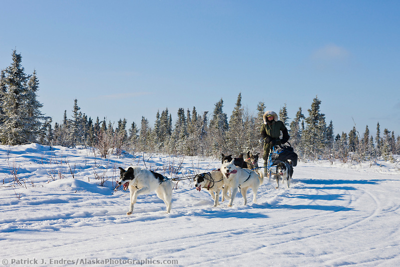 Recreational dog mushing in the White Mountains National Recreation Area. (Patrick J. Endres / AlaskaPhotoGraphics.com)