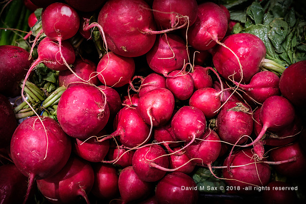 10.9.18 - Red Radishes..... (© David M Sax 2018 - all rights reserved)