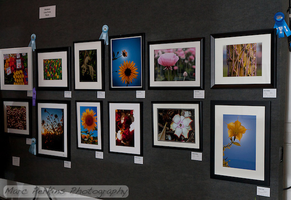 Pictures in the amateur color prints of plants cateogry at the 2011 Orange County Fair.  There were tons of gorgeous entries.  My prize winning picture is in the upper right corner. (Marc C. Perkins)