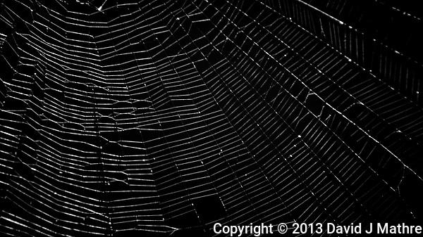 Spider Web. Image taken with a Nikon 1 V2 camera, FT1 adapter, and 70-300 mm VR lens (ISO 160, 185 mm, f/5, 1/60 sec). (David J Mathre)