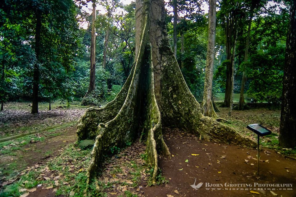 Indonesia, Java, Bogor. The Bogor Botanical Gardens (Kebun Raya). (Photo Bjorn Grotting)