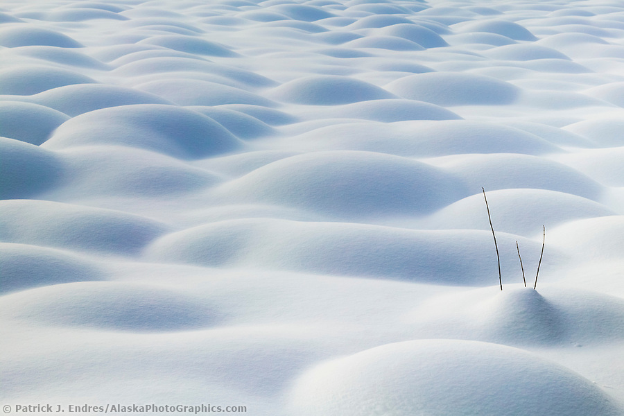 A branch sticks out of the snow covered tussocks on the tundra, Arctic, Alaska (Patrick J. Endres / AlaskaPhotoGraphics.com)