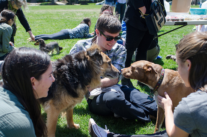2016-04-30-Medford/Somerville-Tufts University-Ellis Oval-Dogs, dog walkers, and dog owners participating in Animal Aid gather near the Ellis Oval (Alex Knapp / The Tufts Daily). (Alex Knapp)