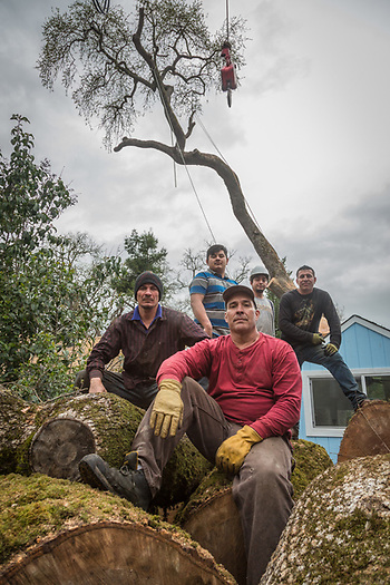 Lift operator Bruce Adair (red) posses with tree cutter Carlos Ruiz (left) and his crew after working all day cutting the majority of a large rotted oak tree at 1514 Myrtle Street in Calistoga. (Clark James Mishler)