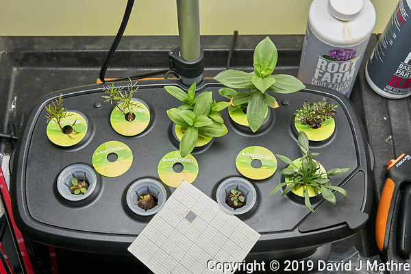 AeroGarden Bounty 01 at 28 days. 01 Cosmos Dwarf Sensation; 02 Cosmos Early Dwarf; 03 Zinnia Thumbelina; 04 Zinnia Lilliput Mix; 05 Marigold Sparky Mix; 06 Blanket Flower; 07 Sweet Alyssum; 08 Coreopsis Lance-leaf; 09 Coreopsis Plains. Image taken with a Leica TL-2 camera and 35 mm f/1.4 lens (ISO 640, 35 mm, f/8, 1/100 sec). (DAVID J MATHRE)