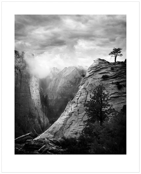 Tree on a Ridge - Zion Natonal Park, Utah, U.S.A. (Ian Mylam/© Ian Mylam (www.ianmylam.com))
