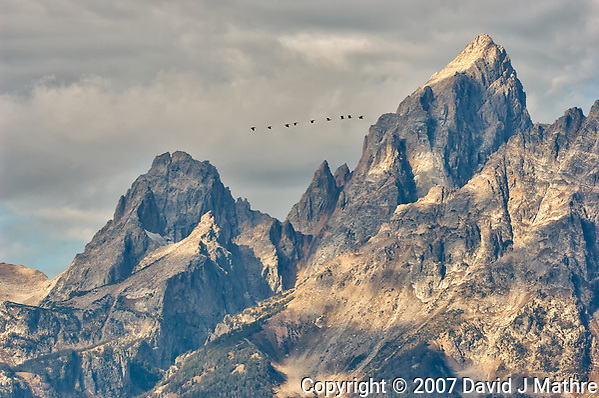 Why are nine large birds flying north past the Grand Tetons in late September? At this distance I can't tell if they are geese, cranes, or swans. My guess is Sandhill Cranes. Grand Teton National Park. Image taken with a Nikon D2xs and 200-400 mm VR lens (ISO 100, 200 mm, f/8,, 1/180 sec). (David J Mathre)