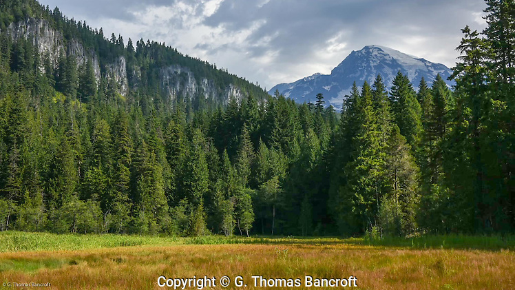 Rampart Ridge rises behind Longmire Meadows. (G. Thomas Bancroft)