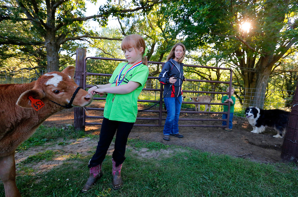 Jillian Dammann, 7, leads Olaf the calf back to his pen while her mother, Jennifer, and brother, Jayden, 3, open the gate for her on at their farm near Essex in rural Page County July 2, 2014. (Christopher Gannon/The Register)