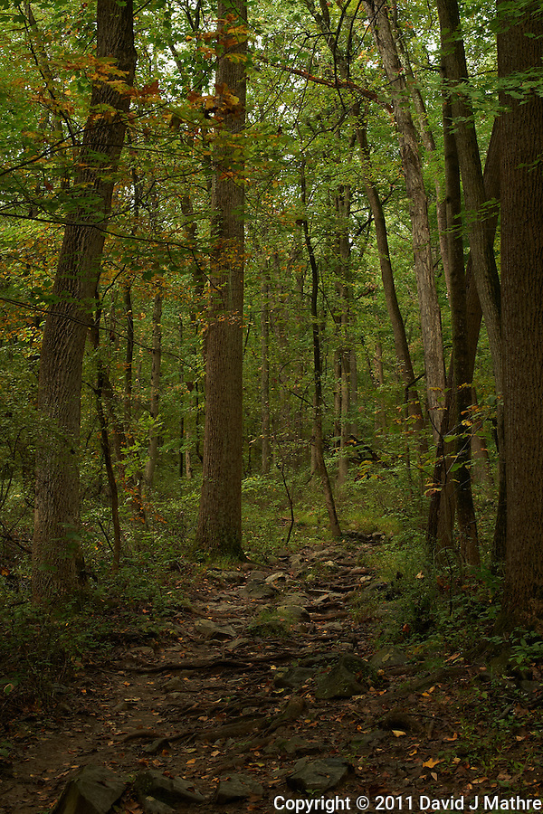 Sourland Mountain Preserve Trail. Worldwide Photo Walk 2011. Autumn in New Jersey. Image taken with a Nikon D3s and 50 mm f/1.4G lens (ISO 320, 50 mm, f/8, 1/50 sec). (David J Mathre)
