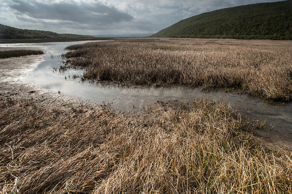 A wetland area beside the Hellshire Hills, a unique ecosystem in Jamaica (Robin Moore)