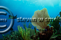 Dive Site Reviews (Steven W Smeltzer)