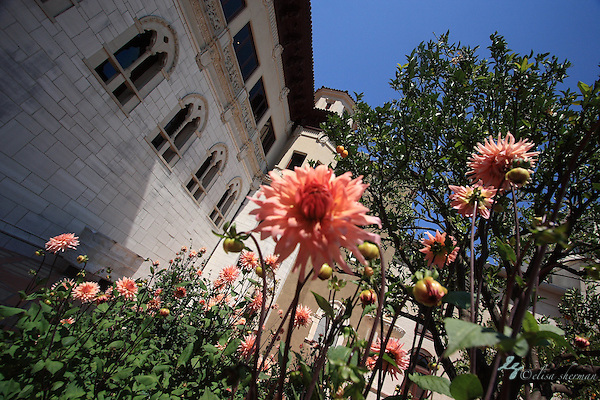 Hearst Castle - California coast (Elisa Sherman)