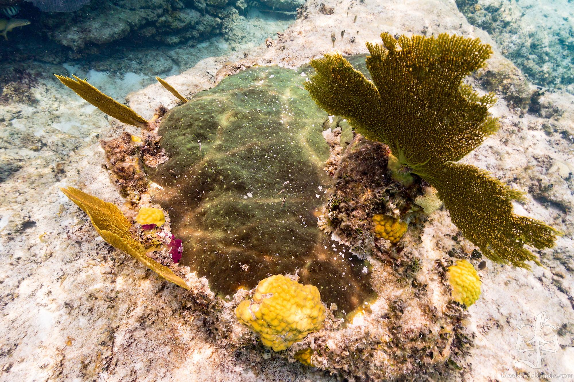 Fans, corals, and sponge (Warren Schultz)