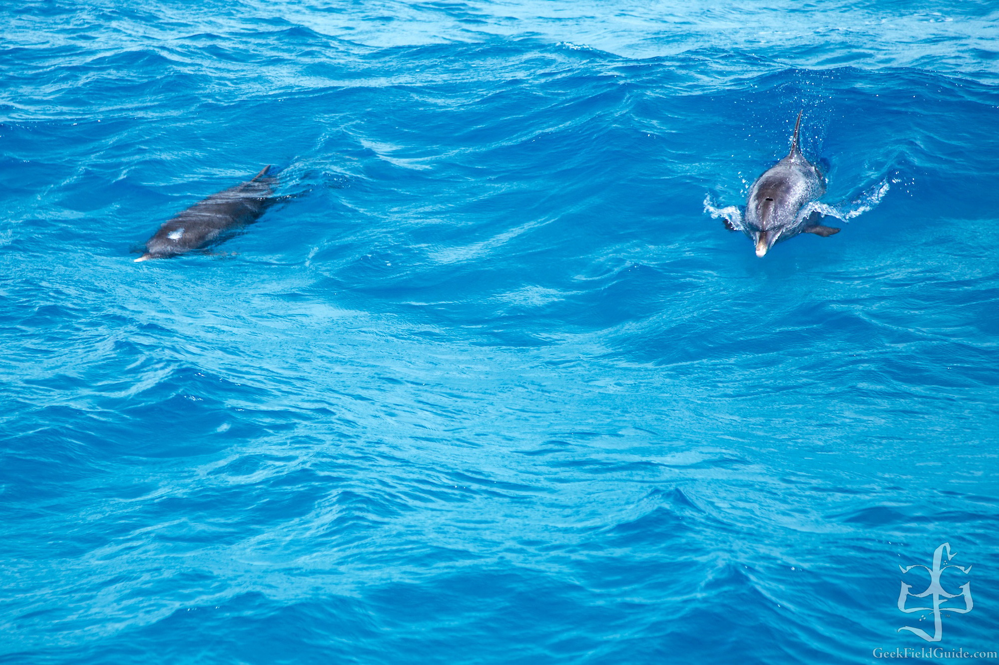 Dolphins! (Finally!) (Atmoji Photography)