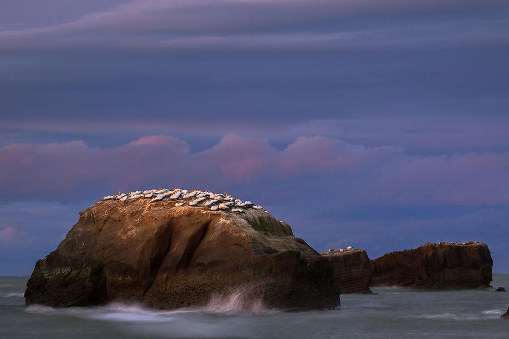 Sunset over breeding gannets (Morus serrator) on small cliff in sea, near Clifton, New Zealand Ⓒ Davis Ulands | davisulands.com (Davis Ulands/Ⓒ Davis Ulands | davisulands.com)