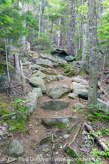 Rock steps along the Inlook Trail in Randolph, New Hampshire during the summer months. This trail leads to Dome Rock and has excellent views looking up Snyder Brook Valley toward Mount Madison and Mount Adams.