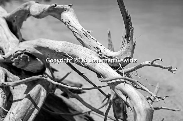 A convoluted piece of driftwood on a Florida Keys beach. (Jonathan.Gewirtz@gmail.com)