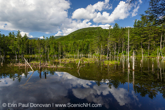2017, reflection of mountains in a beaver Pond along Franconia Brook Trail in the Pemigewasset Wilderness of New Hampshire during the summer months. This trail follows the Franconia Branch of the old East Branch & Lincoln Railroad.