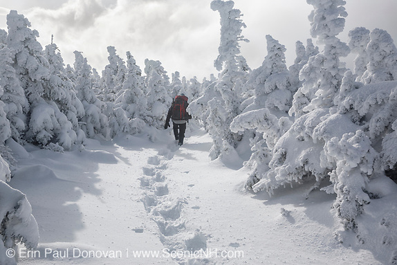 Winter forest scene of a snowshoer on the Carter-Moriah Trail in winter conditions near the summit of Carter Dome in the White Mountains, New Hampshire.