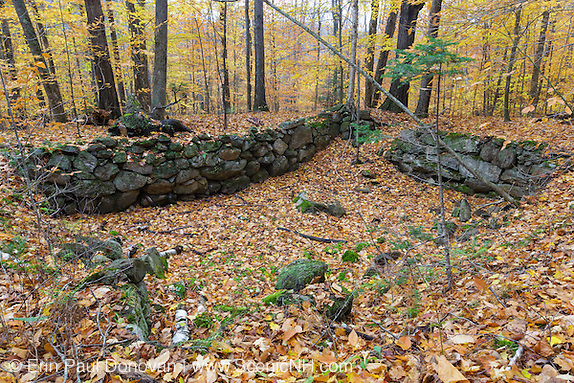 Culture & history of the White Mountains. Remnants of an abandoned cellar hole at Thornton Gore in Thornton, New Hampshire during the autumn months. Thornton Gore is the site of an old hill farming community that abandoned during the 19th century. Based on an 1860 historical map of Grafton County this is believed to have been the P.P. Merrill homestead.