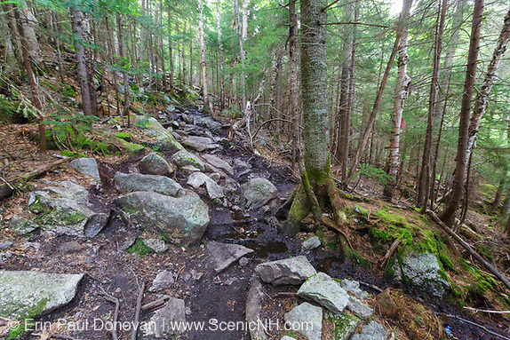 A section of the Mt Tecumseh Trail in the New Hampshire White Mountains in the spring of 2019 that is in desperate need of drainage work.