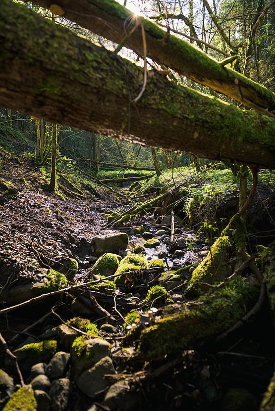 "Small rocky stream in spring sunlight with lots of fallen trees across it, Nature reserve ""Ruņupes ieleja"", Latvia Ⓒ Davis Ulands | davisulands.com (Davis Ulands/Ⓒ Davis Ulands | davisulands.com)"
