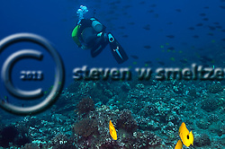 Scuba Diving Fish Rain, Molokai Hawaii (Steven W SMeltzer)