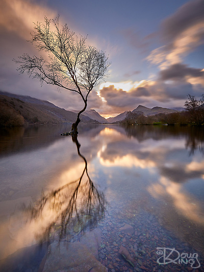 Lone Tree Reflected (Doug King)