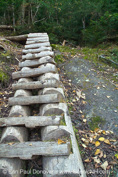 Wooden trail ladder on Israel Ridge Path in the White Mountains of New Hampshire.
