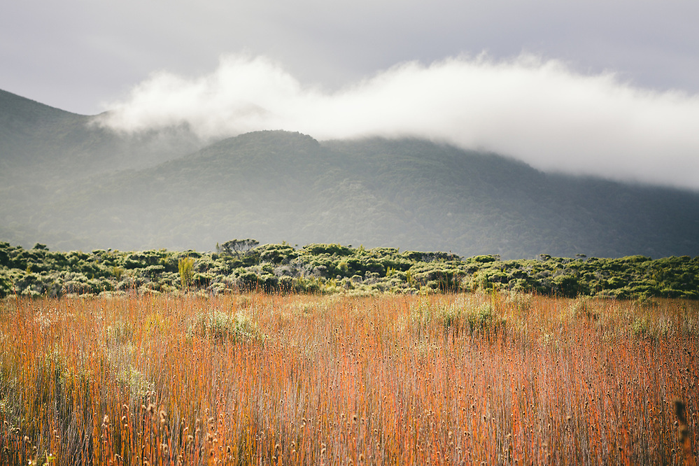 One of many clouds rolls over hills covered with subalpine shrublands, Stewart Island, New Zealand Ⓒ Davis Ulands | davisulands.com (Davis Ulands/Ⓒ Davis Ulands | davisulands.com)