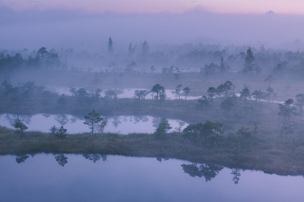 A thick layer of fog covers the raised bog with narrow bog pools before the sunrise, Ķemeri National Park, Latvia Ⓒ Davis Ulands   davisulands.com (Davis Ulands/Ⓒ Davis Ulands   davisulands.com)