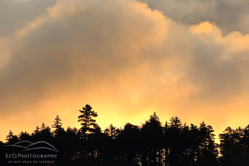 Clouds lit up by morning sun above an evergreen forest in Errol, New Hampshire. Little Bear Brook Pond. (Jerry and Marcy Monkman)