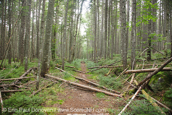 Pemigewasset Wilderness - Shoal Pond Trail during the summer months. This trail is an old railroad bed once used by the East Branch & Lincoln Railroad during the logging era to remove logs from the Shoal Pond Valley in Lincoln, New Hampshire.