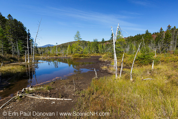 Wetlands area along an old spur line of the East Branch & Lincoln Railroad (1893-1948) in the Norcross Brook drainage of the Pemigewasset Wilderness, New Hampshire during the autumn months.