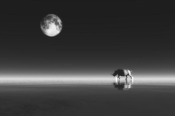 Rhino – Photographers' selection