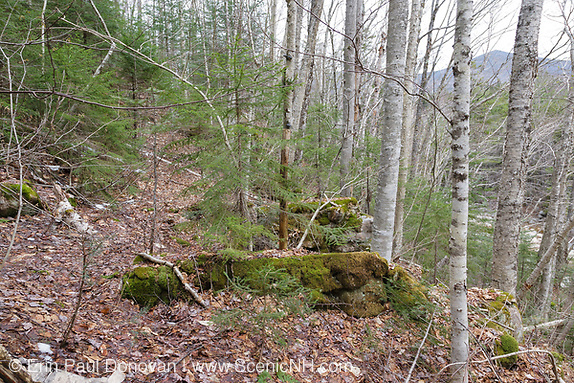 Remnants of a trestle along the old East Branch & Lincoln Logging Railroad (1893-1948), near camp 18, in the Pemigewasset Wilderness of Lincoln, New Hampshire. This trestle was used to cross a steep hillside along the railroad.