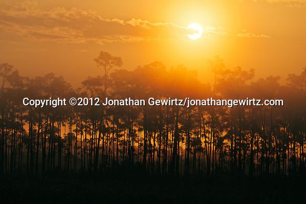 The sun rises above a pine hammock on a foggy morning in Everglades National Park, Florida. (© 2012 Jonathan Gewirtz / jonathan@gewirtz.net)