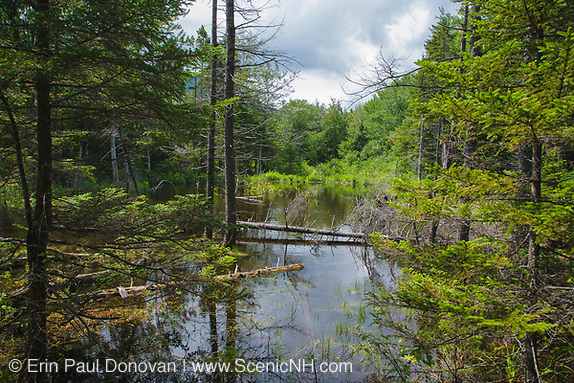 Wetlands area deep in the Pemigewasset Wilderness of the New Hampshire White Mountains USA. Railroad track from a spur line of the East Branch & Lincoln logging Railroad (1893-1948) is submerged in this swamp.