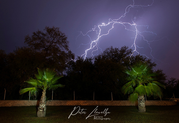 Lightning storm over lightpainted palm trees, Matehuala, San Luis Potosí, Mexico. (Peter Llewellyn)