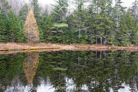 Black Pond on the side of Black Pond Trail in Lincoln, New Hampshire