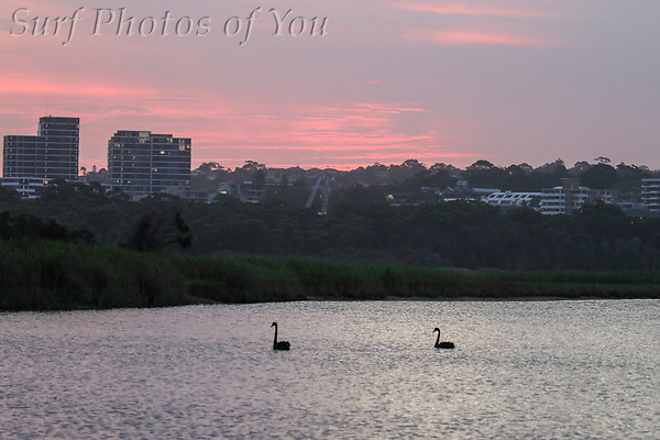 $45.00, 31 January 2019, Narrabeen, Surf Photos of You, @surfphotosofyou, @mrsspoy ($45.00, 31 January 2019, Narrabeen, Surf Photos of You, @surfphotosofyou, @mrsspoy)