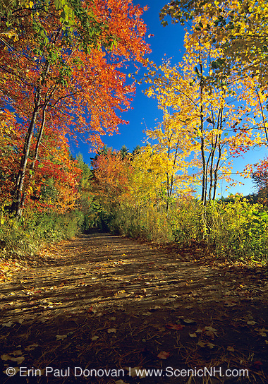 Pawtuckaway State Park - Round Pond Road in Nottingham, New Hampshire USA during the autumn months.