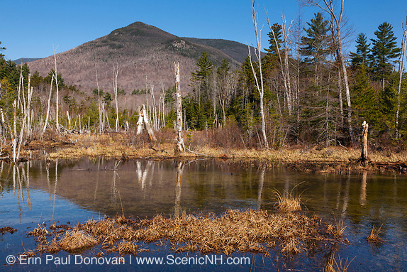 Wetlands area along the Franconia Brook Trail in the Pemigewasset Wilderness of Lincoln, New Hampshire. The southern end of Owls Head is off in the distance. A spur line of the old East Branch & Lincoln Logging Railroad traveled through this area.