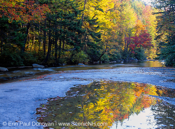 Reflection of autumn colors along the Swift River, which is located next to the Kancamagus Highway (route 112) in the White Mountains, New Hampshire.