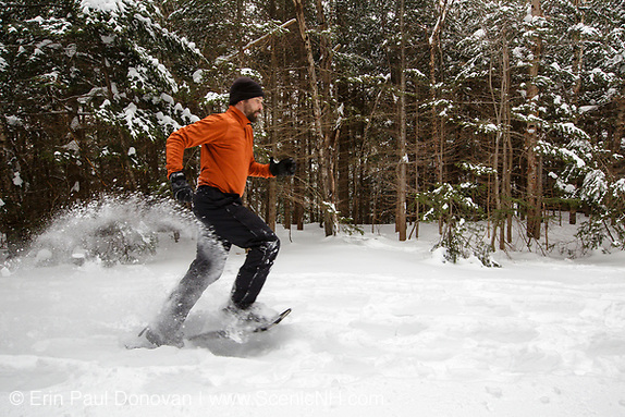 Man snowshoeing in the White Mountain National Forest of New Hampshire USA after a dusting of snow (ScenicNH Photography LLC | Erin Paul Donovan)