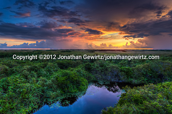 Distant showers lit by the setting sun provide a glorious backdrop to the alligator pond and surrounding vegetation near the Shark Valley observation tower in Everglades National Park, Florida. (© 2012 Jonathan Gewirtz / jonathan@gewirtz.net)